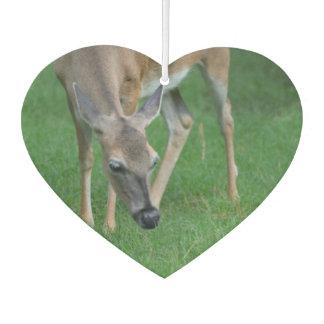 Adorable Deer