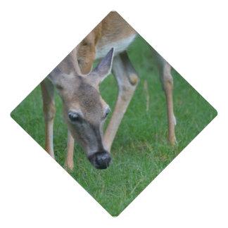 Adorable Deer Graduation Cap Topper