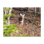 Adorable Deer in the Woods Nature Photography Canvas Print