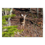 Adorable Deer in the Woods Nature Photography Card