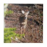 Adorable Deer in the Woods Nature Photography Ceramic Tile