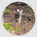 Adorable Deer in the Woods Nature Photography Classic Round Sticker