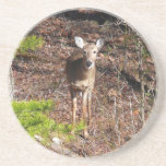 Adorable Deer in the Woods Nature Photography Coaster