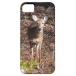Adorable Deer in the Woods Nature Photography iPhone SE/5/5s Case