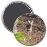 Adorable Deer in the Woods Nature Photography Magnet