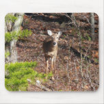 Adorable Deer in the Woods Nature Photography Mouse Pad