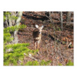 Adorable Deer in the Woods Nature Photography Photo Print