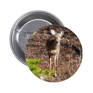 Adorable Deer in the Woods Nature Photography Pinback Button