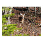 Adorable Deer in the Woods Nature Photography Postcard
