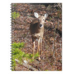 Adorable Deer in the Woods Nature Photography Spiral Notebook
