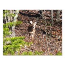 Adorable Deer in the Woods Photo Print