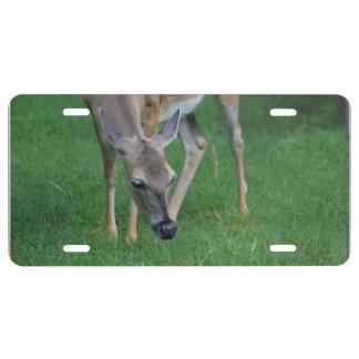 Adorable Deer License Plate
