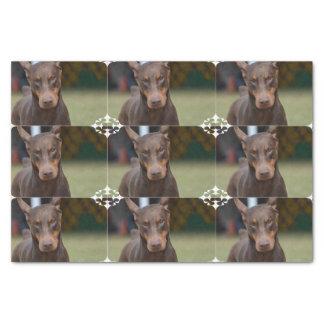 """Adorable Doberman Pinscher 10"""" X 15"""" Tissue Paper"""