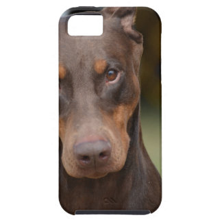Adorable Doberman Pinscher iPhone SE/5/5s Case