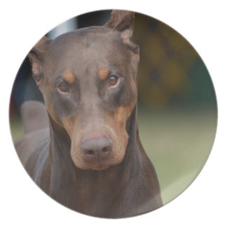 Adorable Doberman Pinscher Dinner Plates