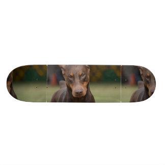 Adorable Doberman Pinscher Skate Boards