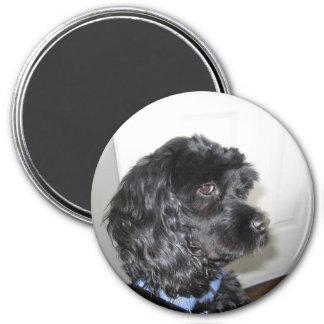 Adorable Dog Magnet