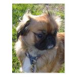 Adorable Dog Postcard