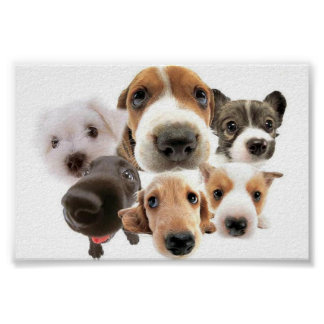 Adorable Dogs Poster