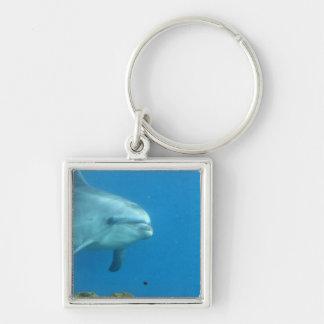 Adorable Dolphin Keychain