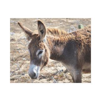 Adorable Donkey Canvas Print