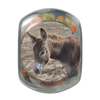Adorable Donkey Jelly Belly Candy Jars