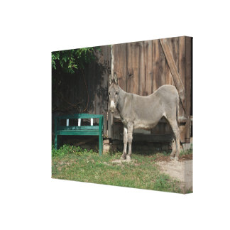 Adorable Donkey Next To Wooden Green Bench Canvas Print