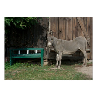 Adorable Donkey Next To Wooden Green Bench Print