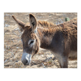 Adorable Donkey Postcard