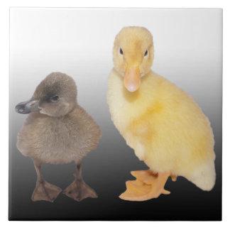Adorable Ducklings Photograph Ceramic Tile