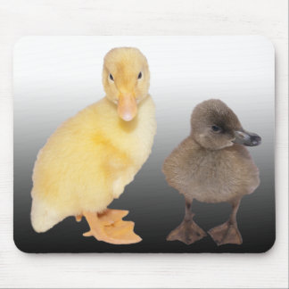 Adorable Ducklings Photograph Mouse Pad