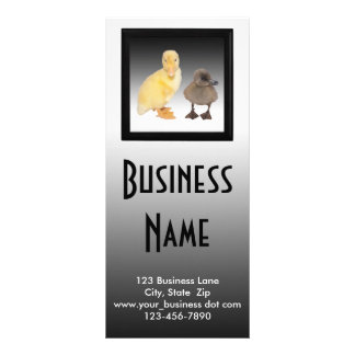 Adorable Ducklings Photograph Customized Rack Card