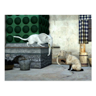 Adorable Elephant Cats Postcard