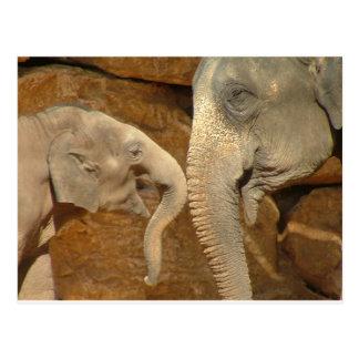 ADORABLE ELEPHANTS POSTCARD