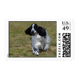 Adorable English Cocker Spaniel Postage