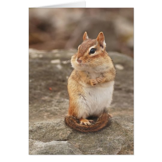 Adorable fat & fluffy chipmunk card