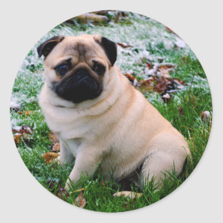 Adorable fawn Pug Puppy Dog Design Classic Round Sticker