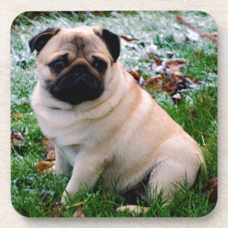 Adorable fawn Pug Puppy Dog Design Coasters