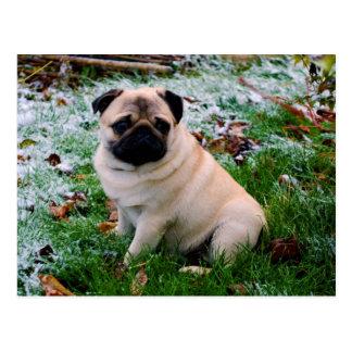 Adorable fawn Pug Puppy Dog Design Postcard