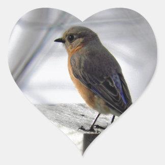 Adorable Female Bluebird Heart Sticker