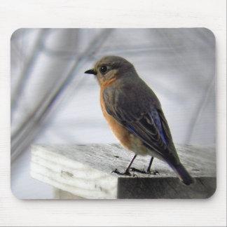 Adorable Female Bluebird Mouse Pad