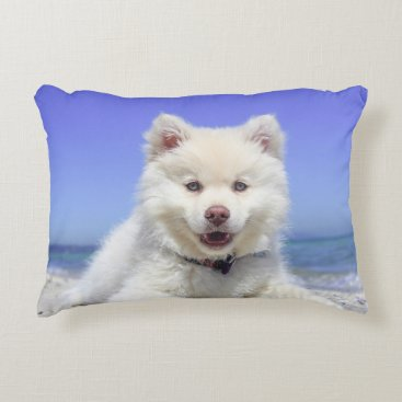 Beach Themed Adorable Finnish Lapphund at the beach Accent Pillow