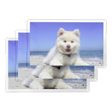 Adorable Finnish Lapphund at the beach Acrylic Tray