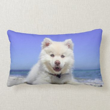 Beach Themed Adorable Finnish Lapphund at the beach Lumbar Pillow