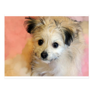 Adorable Floppy Ear Rescue Puppy Postcard