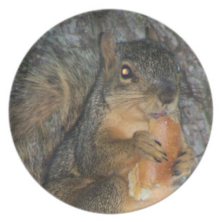 Adorable Fox Squirrel in a Tree Eating a Roll Plate