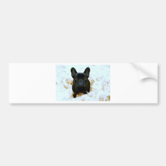 Adorable French Bulldog Puppy! Bumper Stickers