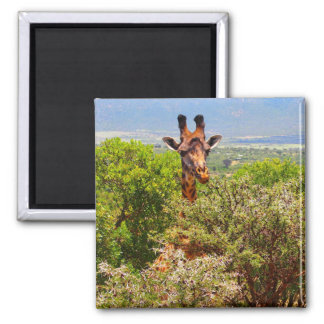 Adorable Giraffe Poking His Head Above The Trees Magnet