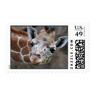 Adorable Giraffe Postage Stamp