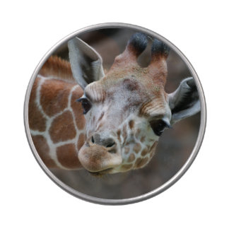 Adorable Giraffes Jelly Belly Tin
